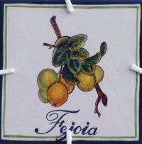 Logo-Fejoia