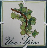 Logo-Uva-Spina
